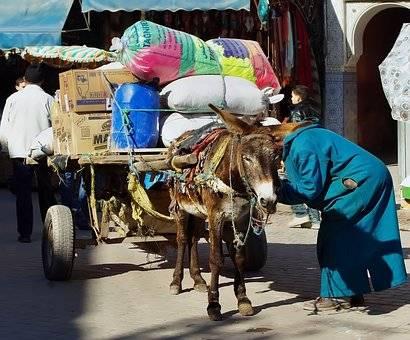 TK-sud transporteur de colis & export Maroc